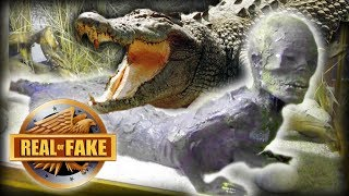 ALLIGATOR MAN - real or fake?