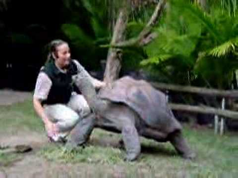 185 year old tortoise