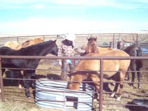 '08 yearlings PD Jones Horse Ranch