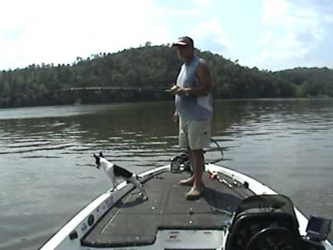Longnose Gar Fishing How to Site Cast