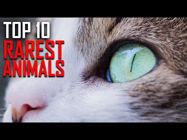 Top 10 Rarest Animals in the World
