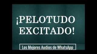Pelotudo Excitado - Los Mejores Audios De WhatsApp