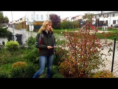 Удивите соседей зимой цветами в саду