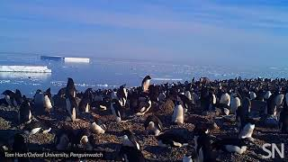 Poop-encrusted rocks reveal penguin supercolony in Antarctica | Science News