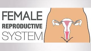 What is the Female Reproductive System
