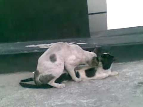 Meow- Meow Scandal @ Sitel OJV.mp4