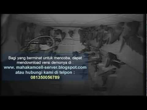 Seluwang ( Suara Walet Asli Kalimantan ) video