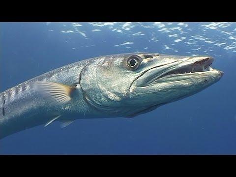 Крупная Рыба Торрент