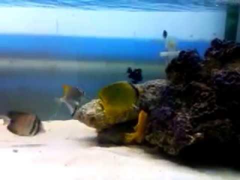 Marine aquarium in Bangladesh part 05