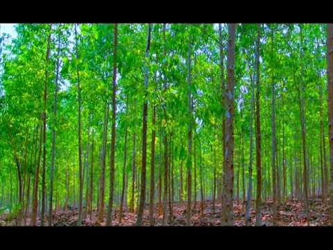 Medio ambiente. Una mirada a nuestros recursos naturales, mirada a nuestra realidad.