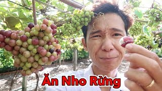 Lâm Vlog - Lần Đầu Ăn Nho Rừng và Uống Rượu Vang Nho Rừng | Vườn Nho Rừng Vang Cy