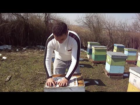 -APICULTURA- VIDEO