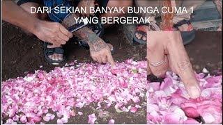 Download Lagu KEJADIAN ANEH DI MAKAM DRUMER SEVENTEEN Gratis STAFABAND