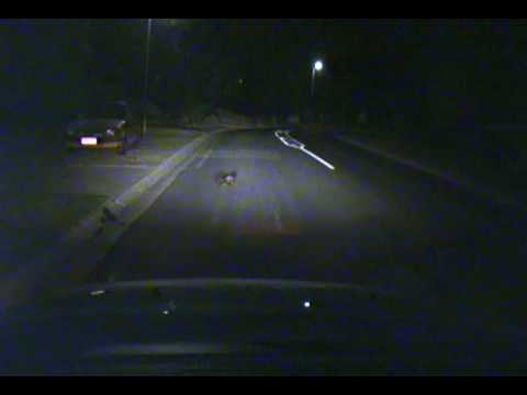 (74) Car Cam: Baby Koala Dies & A Pedestrian Comes Close