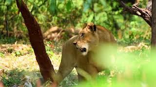 4k demo video on wildlife