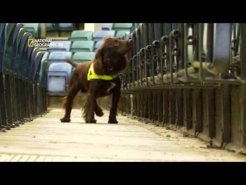 Perros extraordinarios
