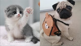 Funny Animals Compilation 2018 - Funny Pets Compilation