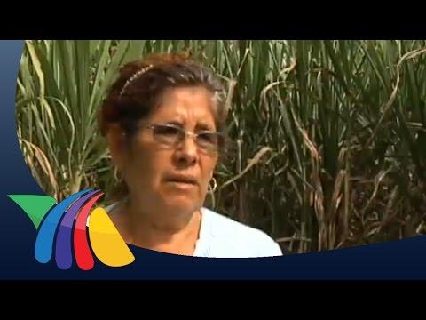 Preparan municipios producción de cañas | Noticias del Estado de México