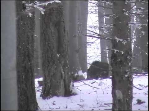 Černá a jeleni