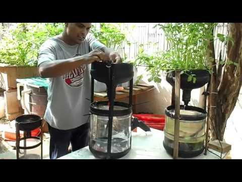 Miniponics   DIY Aquaponics for under 10$