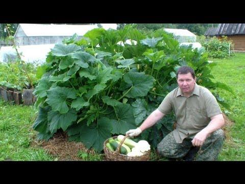 Выращивание огурцов и кабачков 473