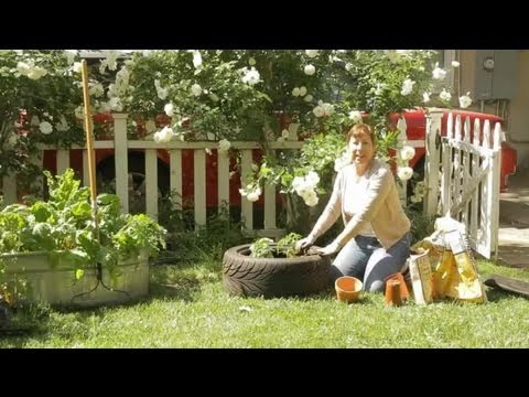 How to plant tomatoes in a tire garden space youtube for Planting a garden