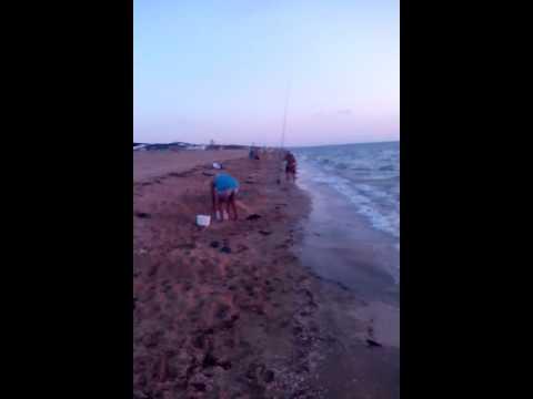 рыбалка на азовском море с берега видео пеленгаса