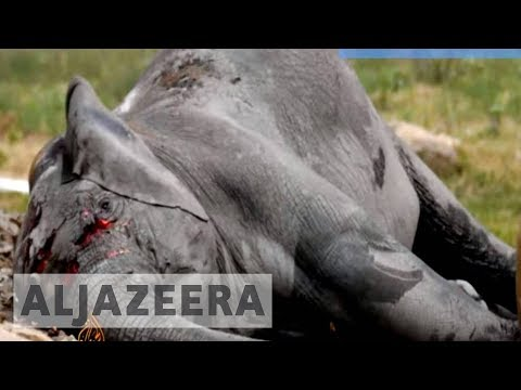 South Sudan's wildlife falls victim to country's war