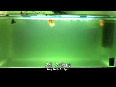 Experiment UV Sterilizer Filter Aquarium