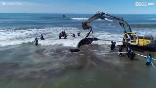 Stranded whale returns to sea after 28-hour rescue operation in Argentina