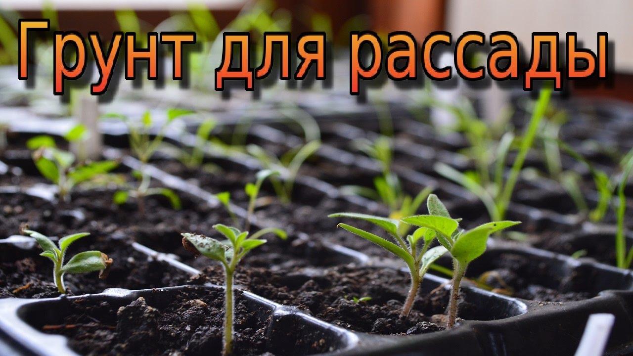 Лучшая земля для выращивания рассады и комнатных