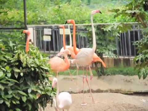 090722京都市動物園4