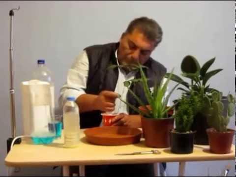Böceklere karşı organik ilaç nasıl yapılır ?