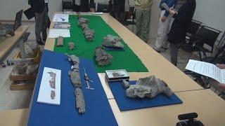 工事現場からクジラの化石