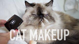 PUTTING MAKEUP ON CAT TUTORIAL | Andrewsoffday