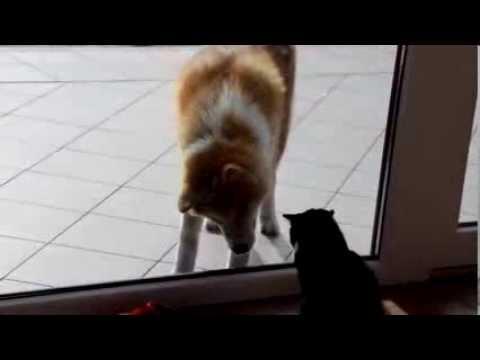 Драка Кошки с Собакой ! Cat vs Dog FIGHT!!!! Юмор ! Прикол ! Смех !