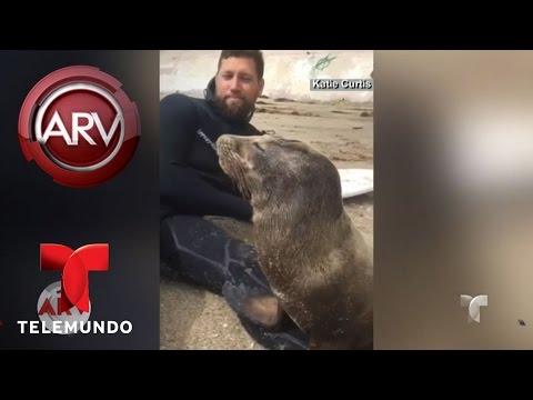 Surfista consuela a un cachorro de león marino | Al Rojo Vivo | Telemundo
