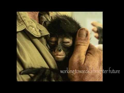 Wildtracks World Wildlife Day Video