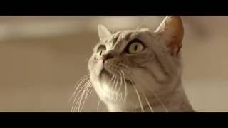BRD Expresso - Cred ca stiu ce Miau. Miau tot ce vreau!