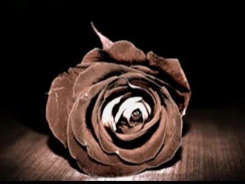 Веня Дркин - Коричневые розы