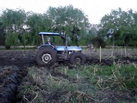 La producción de maíz - Agricultura - Coironal - Yerbas Buenas - Linares - Chile.
