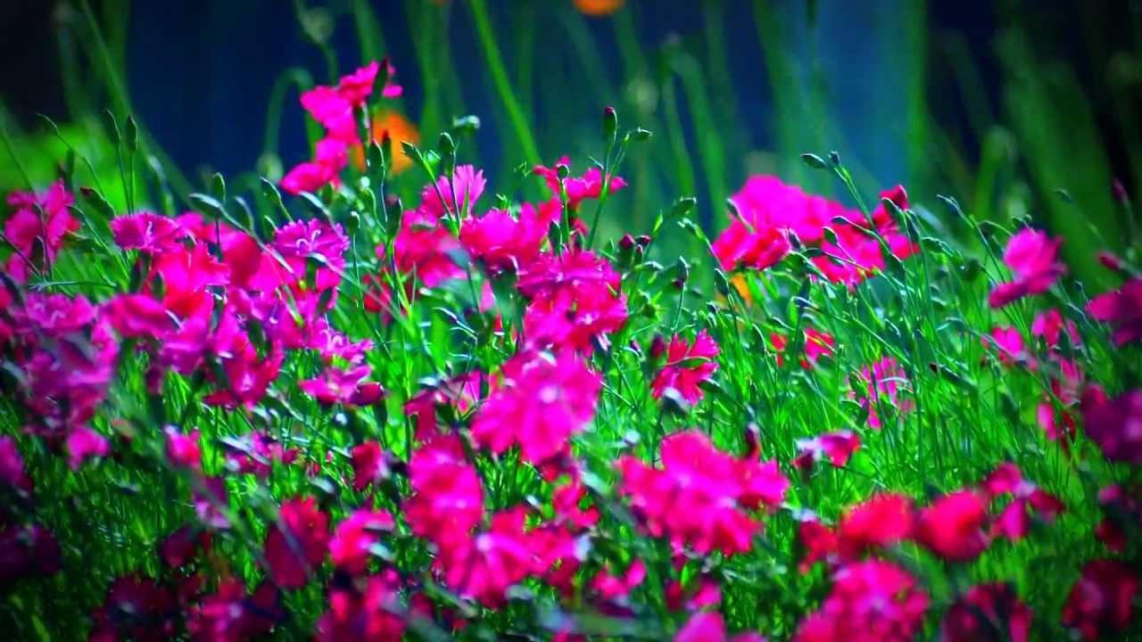 Diferentes tipos de flores youtube - Clase de flores y sus nombres ...