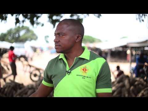Zakibiam Market: The heart of Yam in Nigeria