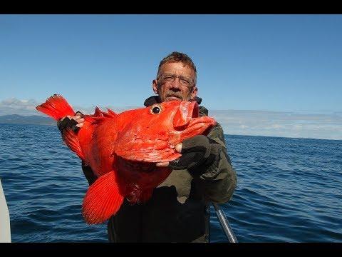 рыбалка в северном океане