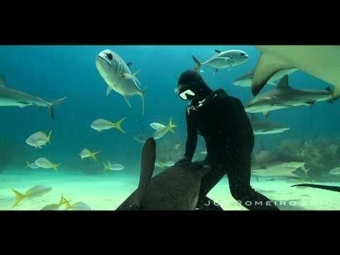 היפנוט כרישים