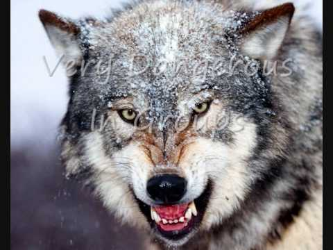 Top 10 Most Dangerous Animals In North-America