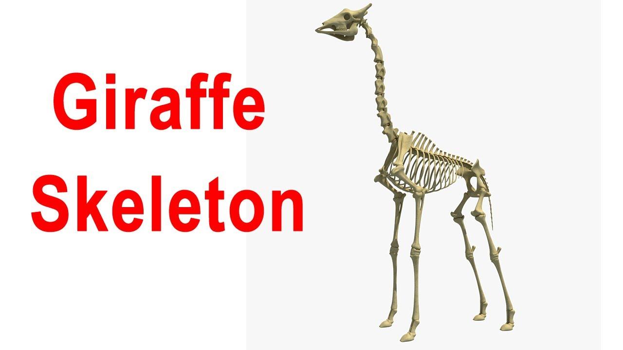 how to make a skeletal model ue4