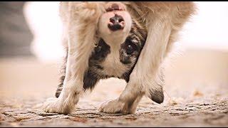Los trucos del perrito ZOE
