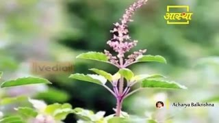 Ayurvedic Benefits of Tulsi For Health Problems | Acharya Balkrishna