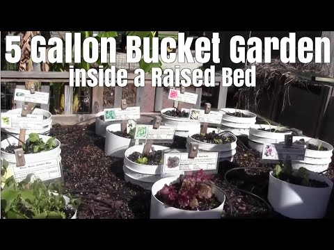 5 Gallon Bucket Garden inside a Raised Bed